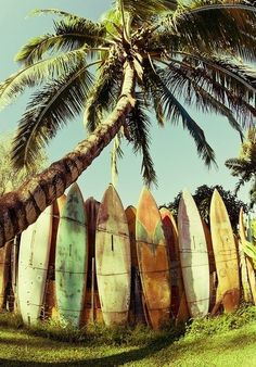 Que buena barda con tablas de #surf, anotada para mi patío. ¿Apoco no? #buenavibra #blenders