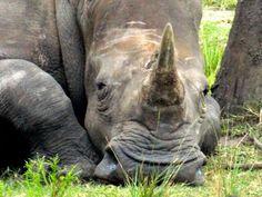 National Geographic Your Shot Jacksonville Zoo, Sun Photo, National Geographic Photos, Amazing Photography, Shots, Elephant, Baking, Animals, Easy
