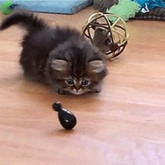 CyBeRGaTa: Cat Gifs Galore - Too Much Cuteness For One Page