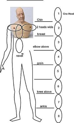 Miniature doll torso on a diagram which relates proportion to head size.