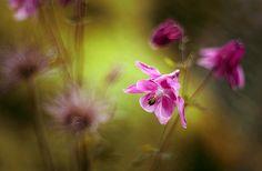 Mycatherina - фотографии. 35фото