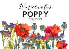 Watercolor poppy by Tatiana_davidova on @creativemarket