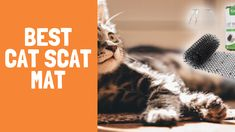 Best Cat Food Mat Best Cat Food, Food Trays, Cat Feeding, Pet Bowls, Cool Cats, Your Pet, Dog Cat, Pets