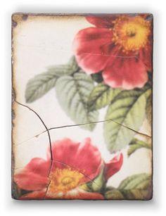 Vincennes' Roses