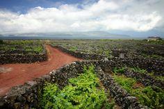 世界遺産から届けられる「ピコ・ワイン」生産方法も古式ゆかしく