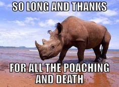 West African Black Rhino officially declared extinct!!