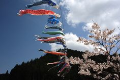 菟田野岩端・桜と鯉のぼり