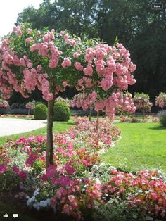 "Eclectic ... like me - via: savannahlondon - source: flowersgardenlove: ""French rose tree"""