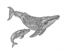Choose your favorite white whale drawings from millions of available designs. All white whale drawings ship within 48 hours and include a money-back guarantee. Whale Tattoos, Cute Tattoos, Humpback Whale Tattoo, Animal Drawings, Art Drawings, Whale Drawing, Whale Sketch, Whale Illustration, Whale Art