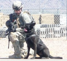 Military Dog Pictures of the Week (March 28, 2012) | Kevin Hanrahan