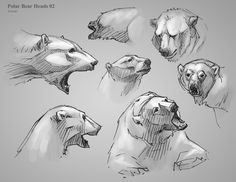 Art References - drawing bears