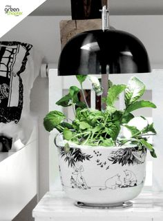 The MOOMIN range by Plantui, available at www.mygreenchapter.com - shop today!