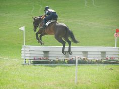 """""""Summer was so good on her first 3 day schooling event trip!"""""""