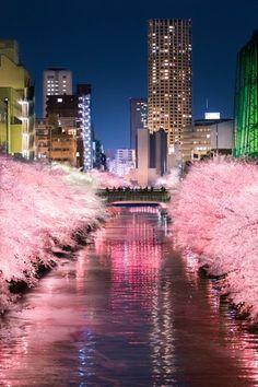 目黒川の夜桜@Twitter