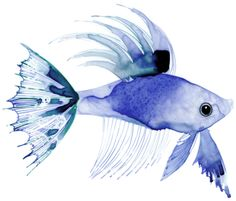 Art, illustration, hand lettering, design, murals and more. Watercolor Fish, Watercolor Animals, Floral Watercolor, Watercolor Paintings, Watercolors, Guache, Illustrations, Fish Art, Watercolor Techniques