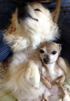 almost aww 21 Whatever happens, dont say Awww (31 Photos)