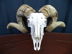 MERINO-RAM-SKULL-SHEEP-HORNS-HEAD-ANTLERS-TAXIDERMY-HUNTING-DEER-GOAT-ANIMAL-ART