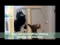 Armarkat Cat Tree In Ivory Online Pet Supplies, Cat Tree, Pet Products, Pets, Ivory, Animals, Videos, Classic, Youtube