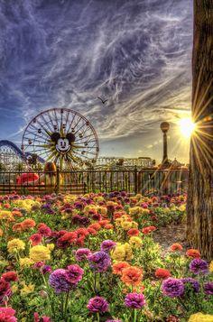 Disney California Adventure park, Disneyland Resort - from Tours Departing Daily website. Disney California Adventure Park, Disneyland California, Disneyland Resort, Anaheim California, Disneyland Trip, Disneyland Photos, California Sunset, California Garden, California Vacation
