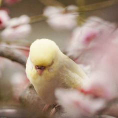 Little delicate Spring bird ~ VoyageVisuelle ✿⊱╮  (via Pin by Andrea A Elisabeth ✿⊱╮VoyageVisuelle on Buttercream Yellow & V…)