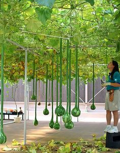 Agriculture Hydroponics In India