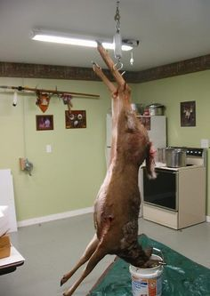 Skinning and Deboning a Deer Step by Step Guide with Pictures