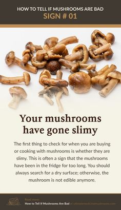 Mushrooms, especially store-bought, tend to appear slimy when it has been in the fridge for too long. Fresh mushrooms always have dry surface so if you've noticed that your mushroom developed a slimy coating while in storage, it's time to get rid of it. | Discover more about medicinal mushrooms at ultimatemedicinalmushrooms.com