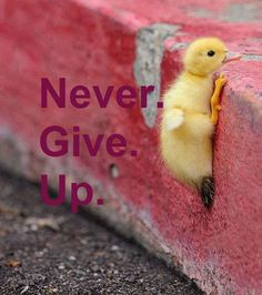 Cute animal pictures with quotes · Never Give Up Duck Animals And Pets, Baby Animals, Funny Animals, Cute Animals, Cute Animal Quotes, Beautiful Birds, Animals Beautiful, Tier Fotos, Mundo Animal
