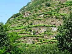 Se i paesaggi sognano di essere necessari che succede?  Terrazzamenti in Valtellina - fotografia di Remo Bracchi