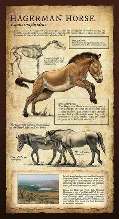 Prehistoric Animals - Imgur