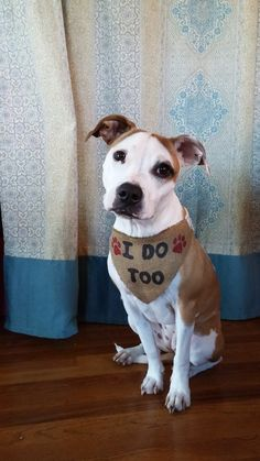 I Do Too Burlap Dog Wedding Bandanna - Accessorize your fur baby's with this burlap pet bandanna! This will be a great touch to any wedding theme.