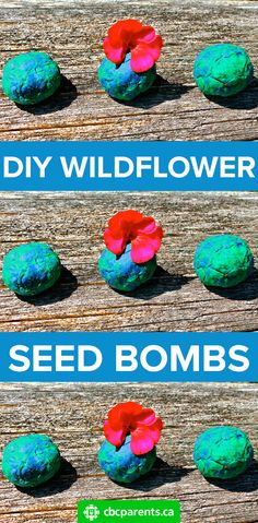 Kids will love making these, planting them and most of all witnessing the miraculous results! You can use the wildflower seed bombs to spread beauty all over: in your backyard, in places that are looking barren and unkempt or along roadsides. #earthday #earth #planetearth #savetheearth #savetheplanet #garden #gardening #seeds #wildflowers #planting #spring #springtime #kids #seedbomb #diy #constructionpaper #springfun #springactivity #nature #outdoors