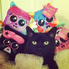 Catsparella: Squaredy Cats Plush Cat Giveaway! I love the black cat- he fits right in!