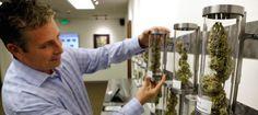 Judge Rules Insurance Company Must Cover Medical Marijuana #news #alternativenews