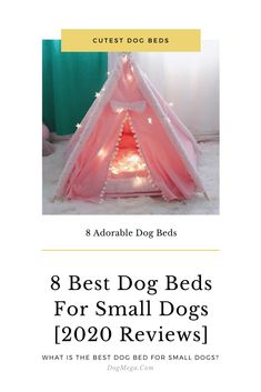 The 8 Best Cute Dog Beds for Small Dog and Puppy