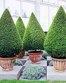 Cultivating beautiful topiaries is not out of reach for the average home gardener, as long as you are committed and patient.