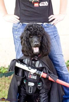 Darth Vader Poodle - Dress up your dog on your phone with Puppy Booth!     http://puppybooth.com