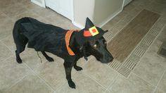Penny Halloween