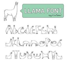 Hahahahahahahahahahaha seriously just laughed for ten minutes. Why are llamas so funny? Alpacas, Camelus, Make Me Happy, Just In Case, Haha, Funny Pictures, Funny Quotes, Hilarious, Typography