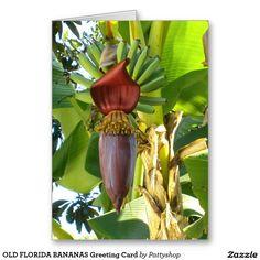 OLD FLORIDA BANANAS Greeting Card