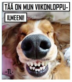 The coffee smile. When the smell of coffee hits your nose before you open your eyes. Smiling Animals, Smiling Dogs, Cute Baby Animals, Funny Animals, Funny Baby Gif, Funny Dogs, Diy Dog Toothpaste, Stockholm, Dog Breath