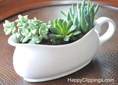 Mini Succulent Garden in a Gravy Boat