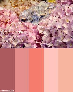 Pastel Paradise Color Scheme