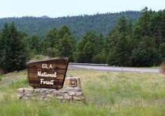 Image result for gila national forest National Forest, Wolf, Outdoor Decor, Image, Wolves, Timber Wolf