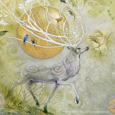 Stag Sonata Cycle Allegro print by Stephanie Law by shadowscapes