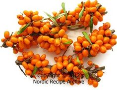 Sea-buckthorn berries. It has lot of vitamin C. In Finland Sea-buckthorn berry grows at the rocky sea side.
