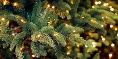 christmas background, new years background, christmas tree wallpaper iphone, winter iphone Christmas Tree Wallpaper Iphone, New Year Wallpaper, Winter Wallpaper, Holiday Wallpaper, Of Wallpaper, December Wallpaper Iphone, Wallpaper Ideas, Nature Wallpaper, Christmas Mood