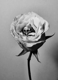 rosekull.