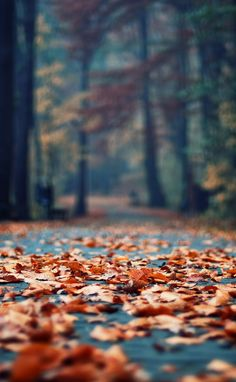 Hiking in the Fall - I love the forrest in autumn. <3 fall leaves.