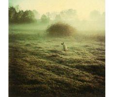 Tarkovsky polaroids